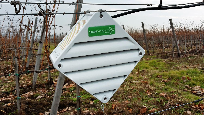 Érzékelőkkel folyamatosan nyomon követik a környezet változását, s azonnal jeleznek, ha a szőlésznek be kell avatkoznia
