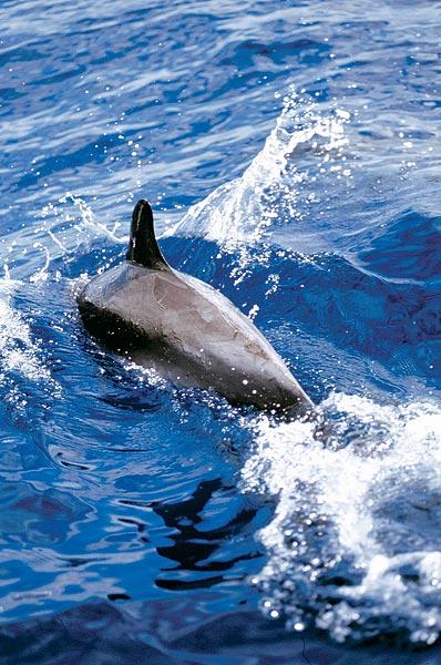 delfin milyen látomás)