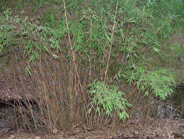A pandák sem mindig csak bambuszon éltek